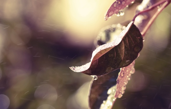 Picture autumn, leaves, water, drops, macro, nature, rain, color, branch