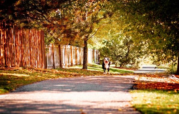 Picture autumn, street, dog