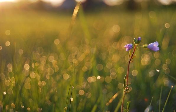 Picture field, summer, grass, drops, macro, light, flowers, freshness, Rosa, glare, beauty, plants