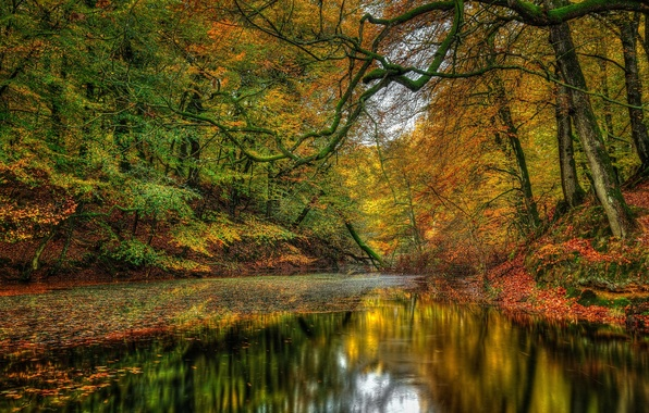 Picture forest, trees, landscape, Nature, forest, river, trees, landscape, nature, autumn, view, scenery, autumn