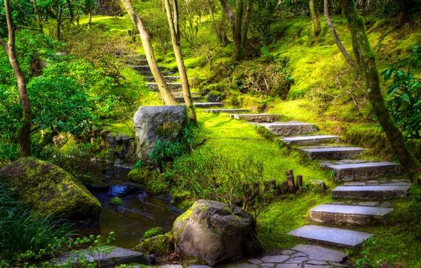 Picture greens, grass, trees, Park, stream, stones, moss, track, steps, USA, the bushes, Oregon, Portland