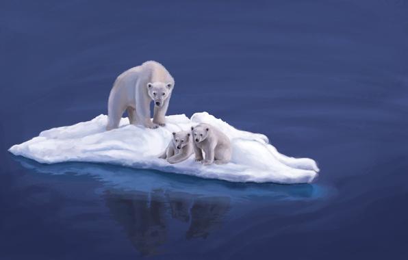 Picture animals, water, the ocean, bears, art, white, floe, bears, bear