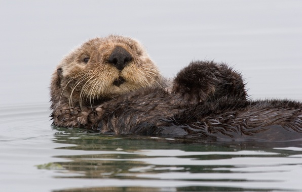 Picture water, Kalan, CA, sea otter