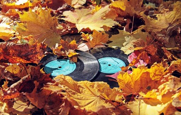 Picture autumn, leaves, vinyl, records