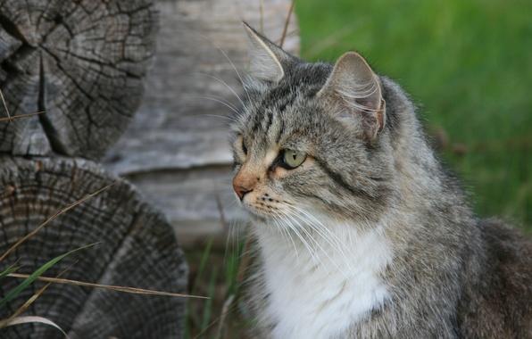Picture cat, cats, nature, animal, Wallpaper, village, hut