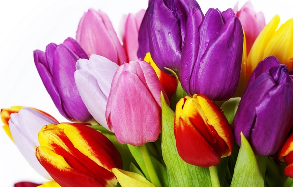 Picture leaves, flowers, bright, beauty, bouquet, petals, purple, tulips, red, red, pink, white, white, colorful, yellow, …