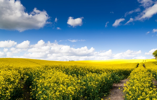 Picture road, field, clouds, nature, expanse, rape