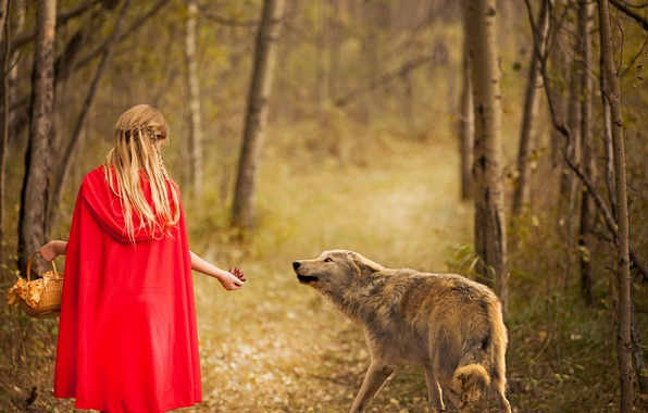 Picture forest, wolf, girl, Red and wolf