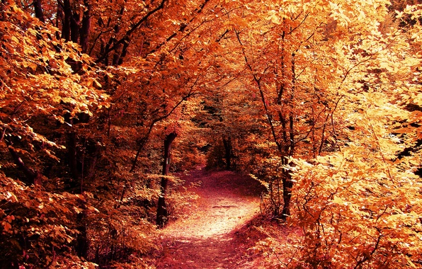 Picture road, autumn, forest, leaves, trees, branches, nature, yellow, path