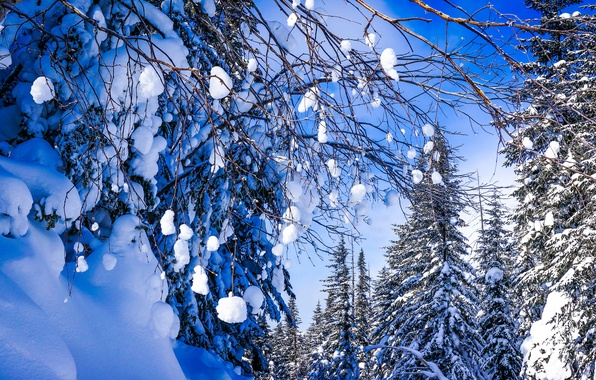 Picture winter, forest, snow, trees, branches, Russia, Khabarovsk Krai