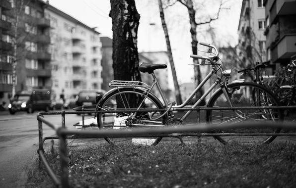 Picture trees, bike, the city, street, building, cars, apartments, city