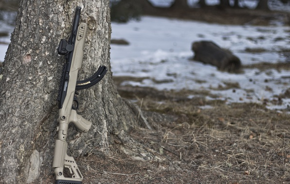Picture weapons, tree, rifle, semi-automatic, Ruger 10/22