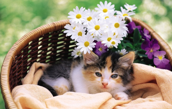 Picture cat, cat, flowers, kitty, pussy, cat, Kote