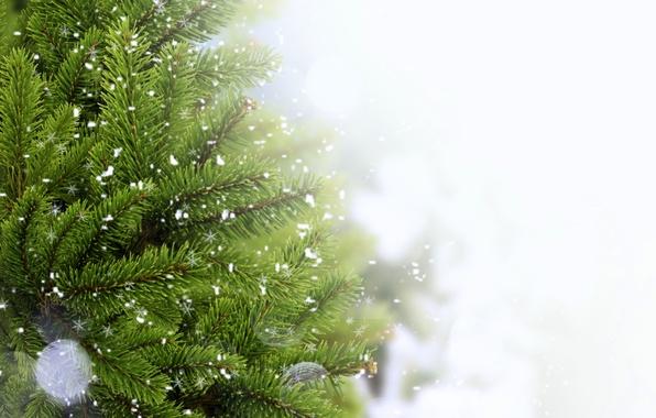 Picture snow, needles, branch, tree