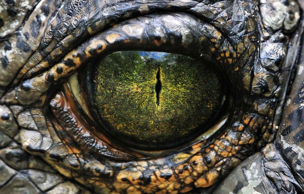 Picture Eyes, Scales, Reptile