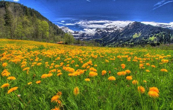 Picture the sky, grass, clouds, snow, trees, landscape, flowers, mountains, nature, green, home, grass, forest, green, …