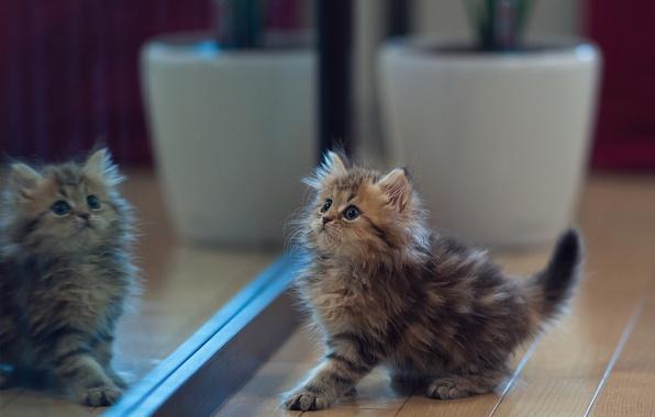 Picture reflection, kitty, mirror, Daisy, Ben Torode, Benjamin Torode