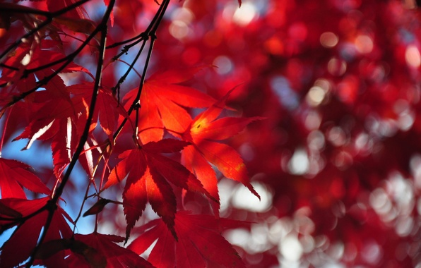 Picture autumn, the sky, leaves, tree, branch, the crimson