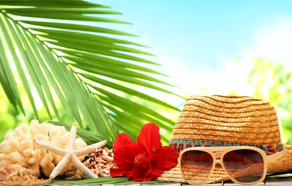 Picture sea, beach, flower, Palma, hat, shell