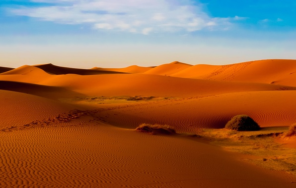 Picture sand, the sky, clouds, desert, barkhan