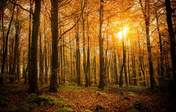 Picture autumn, forest, leaves, the sun, light, trees, branches, nature