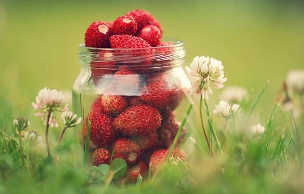 Picture greens, summer, grass, macro, flowers, nature, berries, strawberry, clover, jar