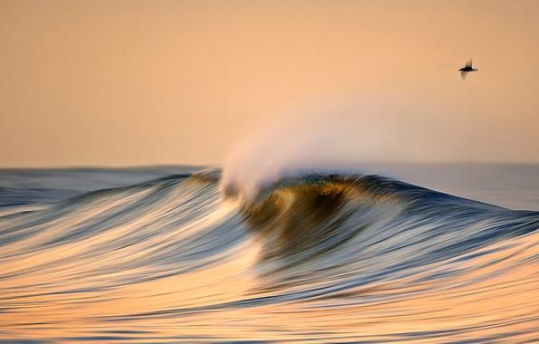 Picture sea, the sky, the ocean, bird, wave, comb