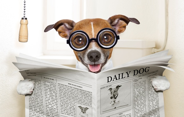 Picture face, humor, glasses, newspaper, toilet, sitting, reads, happy, Jack Russell Terrier