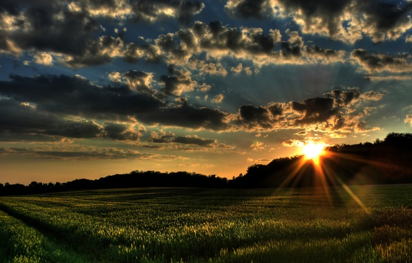 Picture field, grass, the sun, clouds, trees, sunset, nature, the wind, landscapes, field, forest