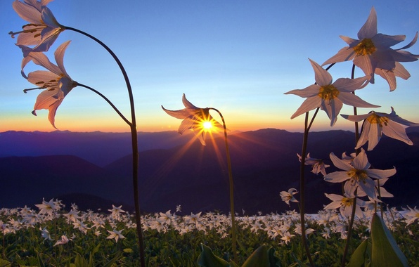 Picture PETALS, NATURE, MOUNTAINS, HORIZON, The SKY, FIELD, FLOWERS, SUNSET, DAL, DAWN