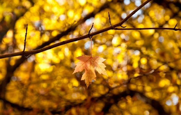 Picture autumn, leaves, macro, branches, yellow, background, tree, widescreen, Wallpaper, blur, leaf, wallpaper, leaf, widescreen, background, …