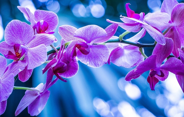 Picture macro, branch, exotic, Orchid