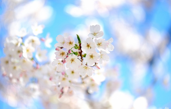 Picture flowers, tree, focus, branch, spring, flowering, fruit