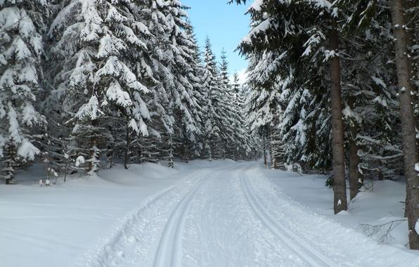 Picture winter, forest, snow, Czech Republic, Sumava, Bohemia, Prášily, Sumava national Park