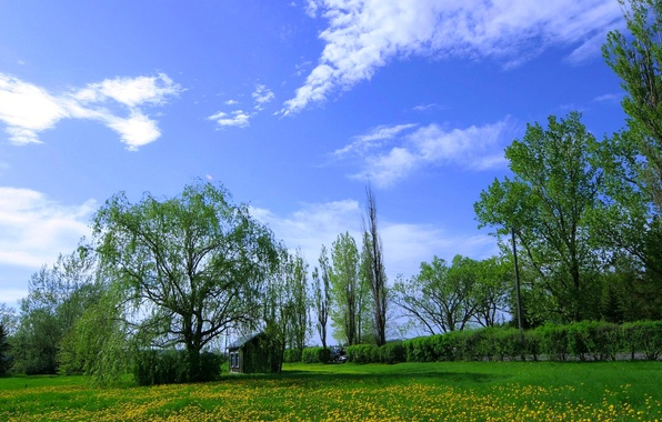 Picture the sky, grass, clouds, trees, flowers, meadow, house, dandelions