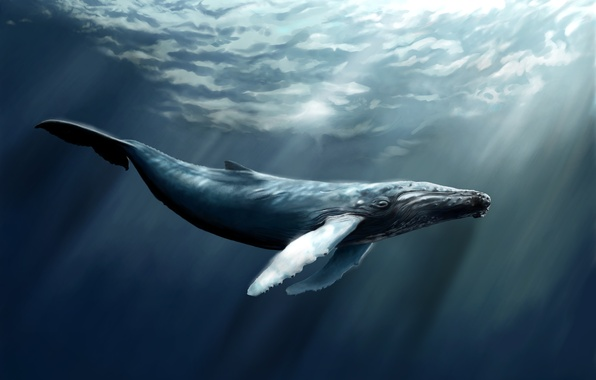 Picture sea, water, fish, art, kit, sperm whale