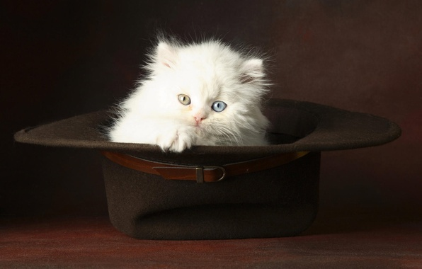 Picture white, eyes, hat, fluffy, Kitty