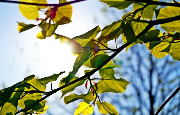 Picture the sky, the sun, macro, green, tree, blue, Sheet, ray