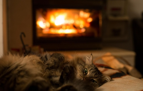 Picture cat, heat, room, animal, legs, wool, lies, fireplace, green eyes