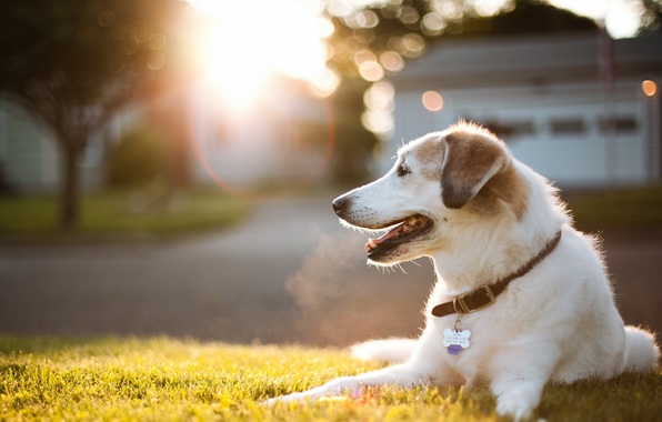 Picture light, street, dog