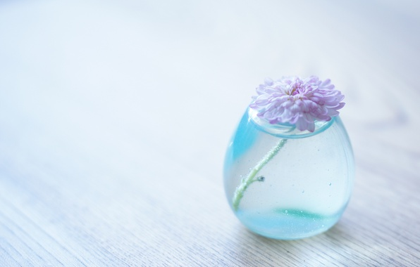 Picture flower, water, background, transparent, vase, chrysanthemum