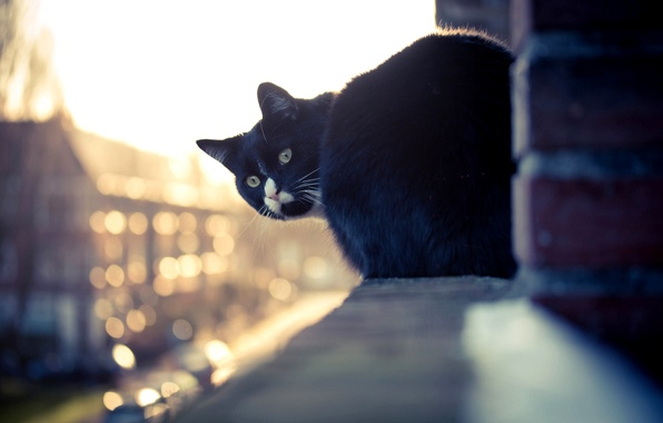 Picture cat, white, cat, look, house, black, the building, window, sill