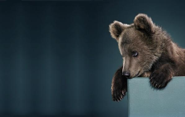 Picture mood, minimalism, baby, bear, bear