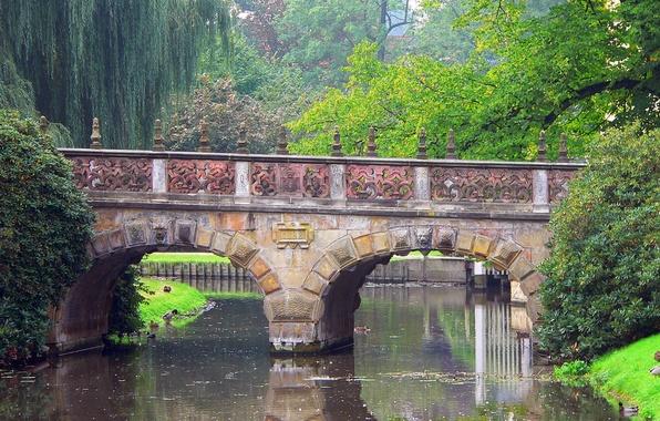 Picture trees, bridge, nature, Park, river, duck