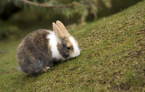 Picture grass, rabbit, sharpness, colors