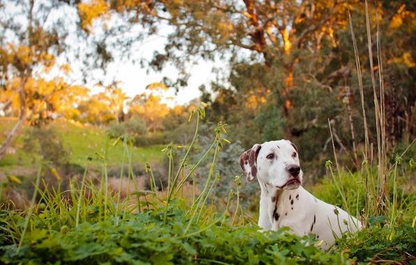 Picture river, dog, dalmatian