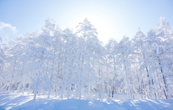 Picture winter, forest, the sky, snow, trees, morning