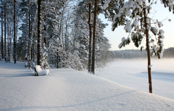 Picture winter, forest, snow, bench