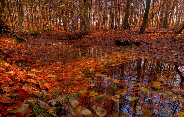 Picture autumn, forest, trees, stream, foliage, river