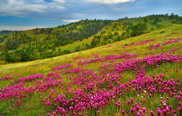 Picture the sky, grass, flowers, mountains, slope
